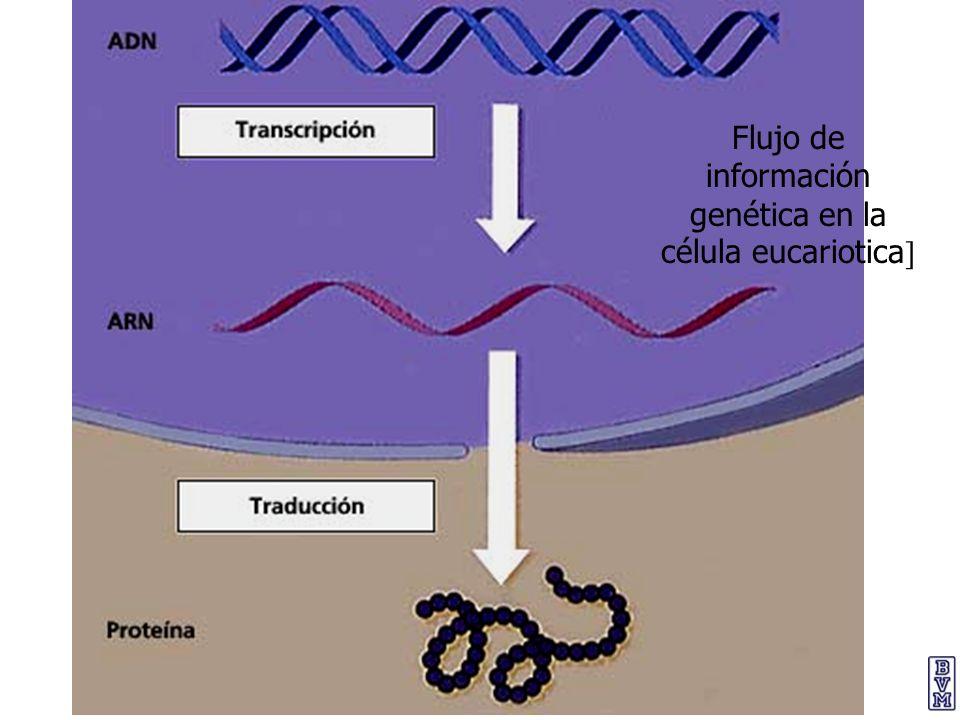 Flujo de información genética en la célula eucariotica]